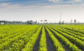 agriculture-Dissertation-Writing-Services