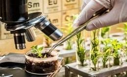 Biotech-Dissertation-Writing-Services